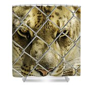 Caged Liger Shower Curtain