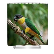 Caique A Tete Noire Pionites Shower Curtain