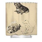 Cairn, Sealyham And Bull Terrier, 1930 Shower Curtain