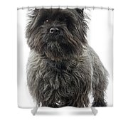 Cairn Terrier Dog Shower Curtain