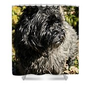 Cairn Terrier Portrait Shower Curtain