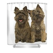 Cairn Terriers Shower Curtain