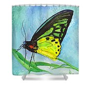 Cairns Birdwing Shower Curtain