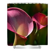 Cala Lilies Light And Shadow Shower Curtain