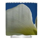 Cala Lilly 11 Shower Curtain