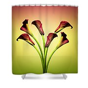 Cala Lily 6 Shower Curtain