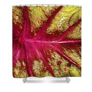 Caladium Leaf Shower Curtain