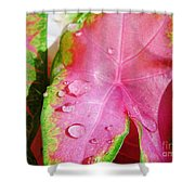 Caladium Leaf Shower Curtain
