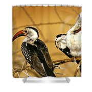 Calao A Bec Rouge Tockus Erythrorhynchus Shower Curtain