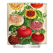 Calceolaria From A Vintage Belgian Book Of Flora. Shower Curtain