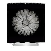 Calendula Flower - Textured Version Shower Curtain