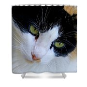 Calico 1 Shower Curtain