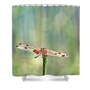 Calico Pennant From Above Shower Curtain