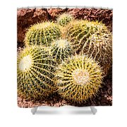 California Barrel Cactus Shower Curtain