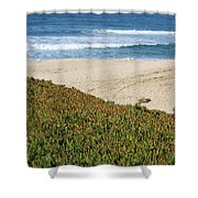 California Beach With Ice Plant Shower Curtain by Carol Groenen