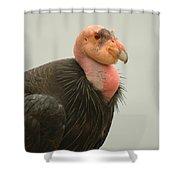 California Condor Big Sur Shower Curtain