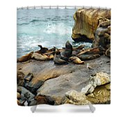 California Dreaming Shower Curtain