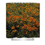 California Gold Poppies Shower Curtain