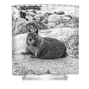 California Ground Squirrel In Black And White Shower Curtain