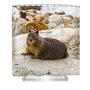 California Ground Squirrel With Sandy Nose Shower Curtain