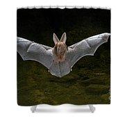 California Leaf-nosed Bat Shower Curtain