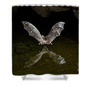 California Long-nosed Bat Flying Away Shower Curtain