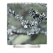 California Moss Shower Curtain