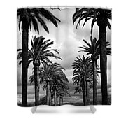 California Palms - Black And White Shower Curtain