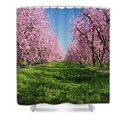 California Peach Tree Orchard  Shower Curtain