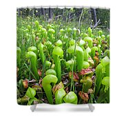 California Pitcher Plant Shower Curtain