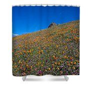 California Poppies Baby Blue Eyes And Owl Clover Shower Curtain
