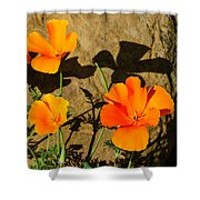California Poppies - Crisp Shadows From The Desert Sun  Shower Curtain