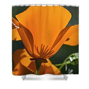 California Poppies  Eschscholzia Shower Curtain
