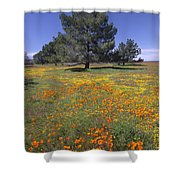 California Poppy And Eriophyllum Shower Curtain
