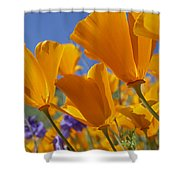 California Poppy Eschscholzia Shower Curtain by Tim Fitzharris