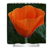 California Poppy Spectacular Shower Curtain