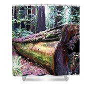 California Redwoods 2 Shower Curtain
