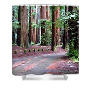 California Redwoods 3 Shower Curtain