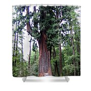 California Redwoods 6 Shower Curtain