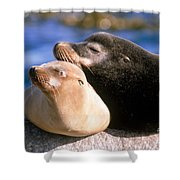 California Sea Lions Shower Curtain by Mark Newman