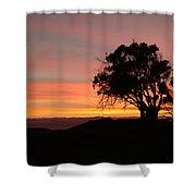 California Tree At Sunset Shower Curtain