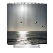 California Seagulls Where Are They Headed Shower Curtain