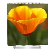 Californian Poppy Shower Curtain