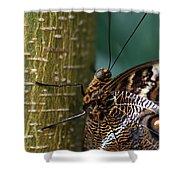 Caligo Atreus Shower Curtain