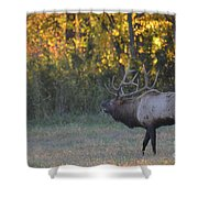 Call Of Love Shower Curtain