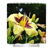 Call To The Sun Shower Curtain