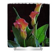 Calla Lilies 2  Shower Curtain