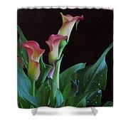Calla Lilies 3 Shower Curtain