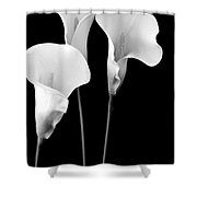 Calla Lilies In Triplicate In Black And White Shower Curtain