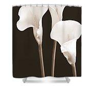 Calla Lilies In Triplicate In Sepia Shower Curtain